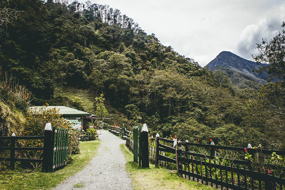 Valle del Cocora, Salento